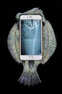 カレイ Phone